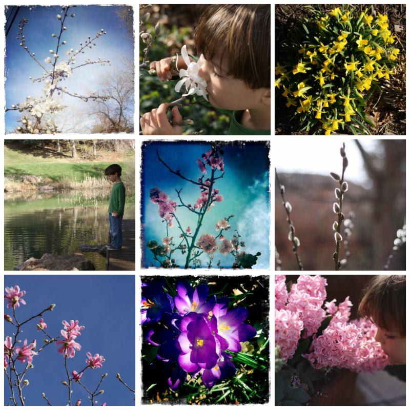 Blossoming Abounds: A Springtime Ritual
